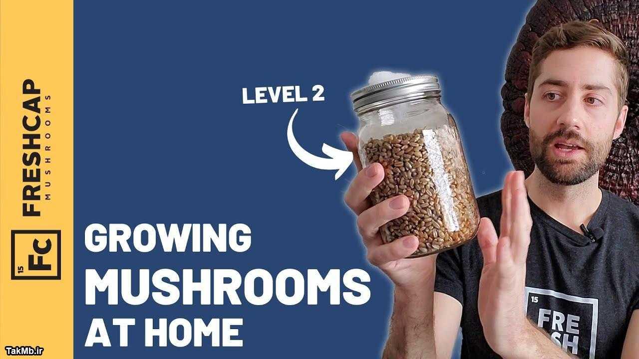آموزش پرورش قارچ در خانه (از راه آسان تا راه سخت)