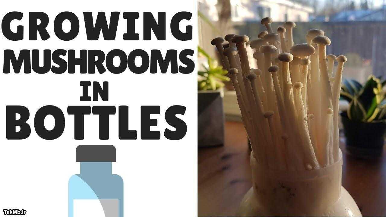 آموزش پرورش قارچ در خانه با استفاده از بطری