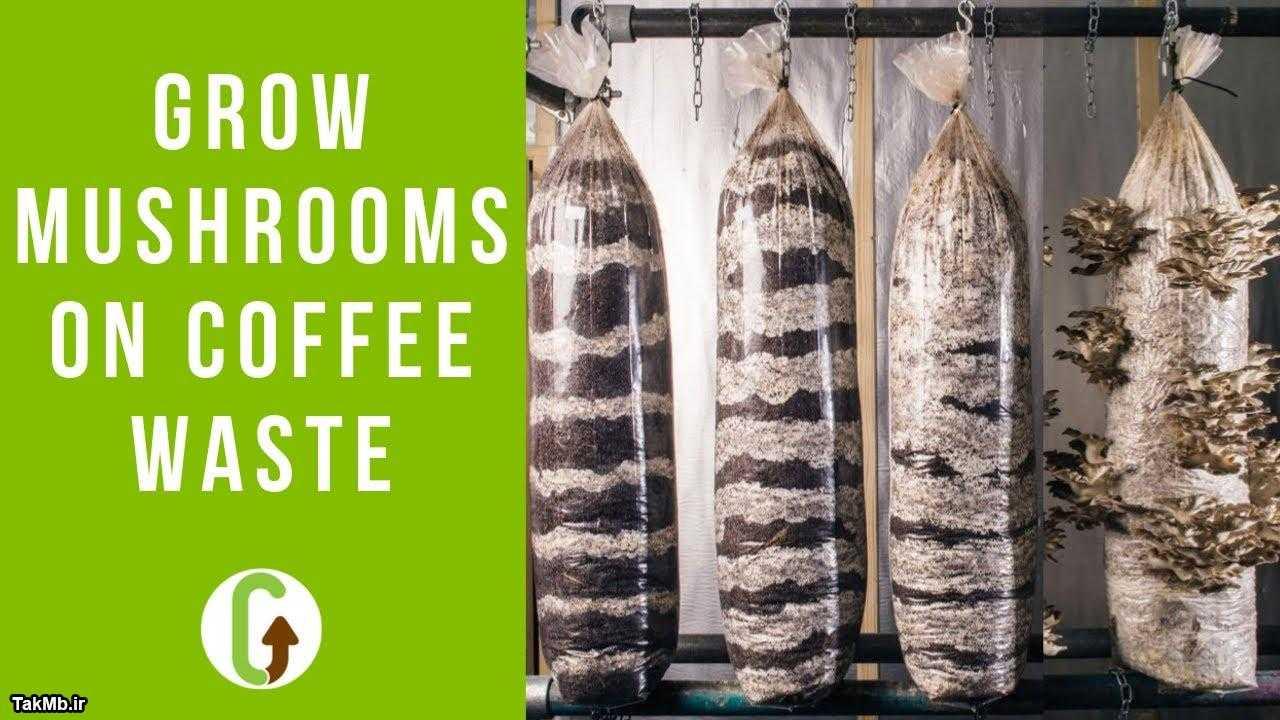 آموزش پرورش قارچ با قهوه