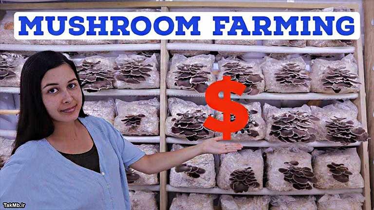 چگونه در یک مکان کوچک پرورش قارچ موفقی داشته باشیم