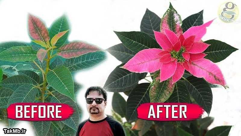 5 نکته طلایی در مورد نگهداری از گل بنت قنسول