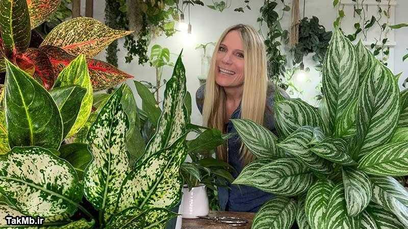 راهنمای کامل مراقبت از گیاه آگلونما